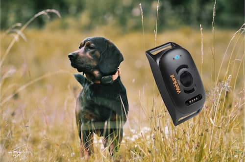 Wehunt GPS -koiratutka II