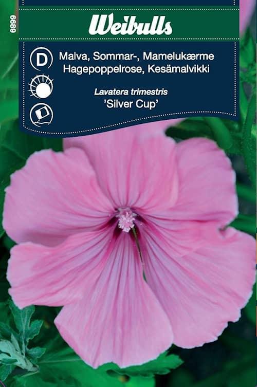 Weibulls Malva Silver Cup kesä
