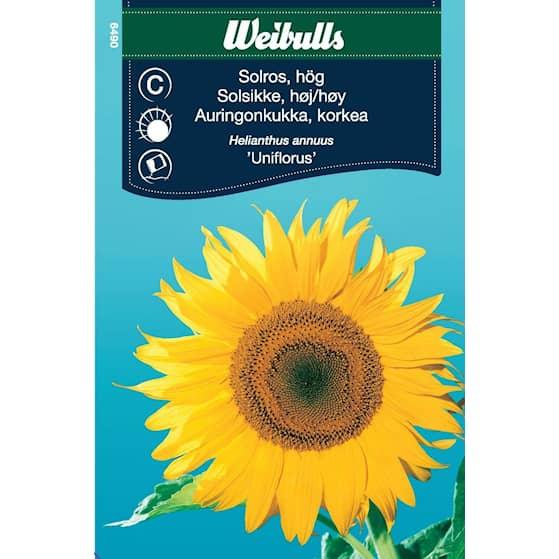 Weibulls Solros uniflorus