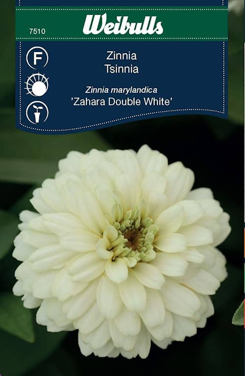 Weibulls Zinnia Zahara DoubleWhite