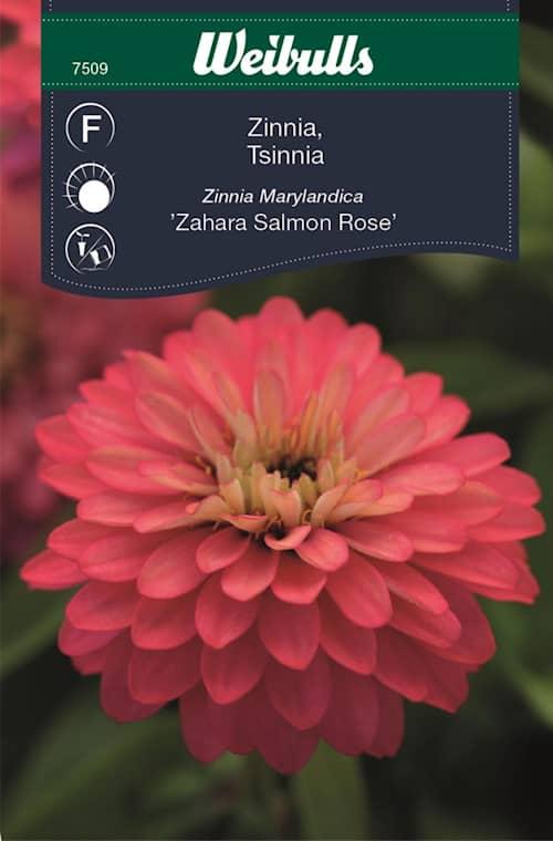 Zinnia Sahara Salmon Rose