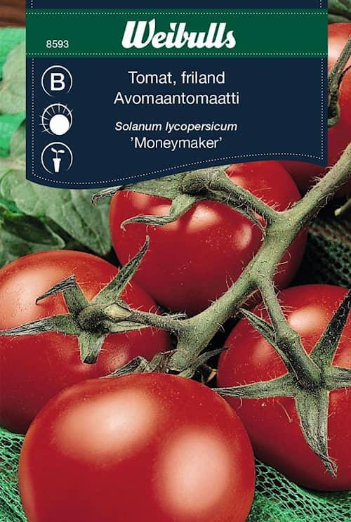 Weibulls Tomat, friland moneymaker