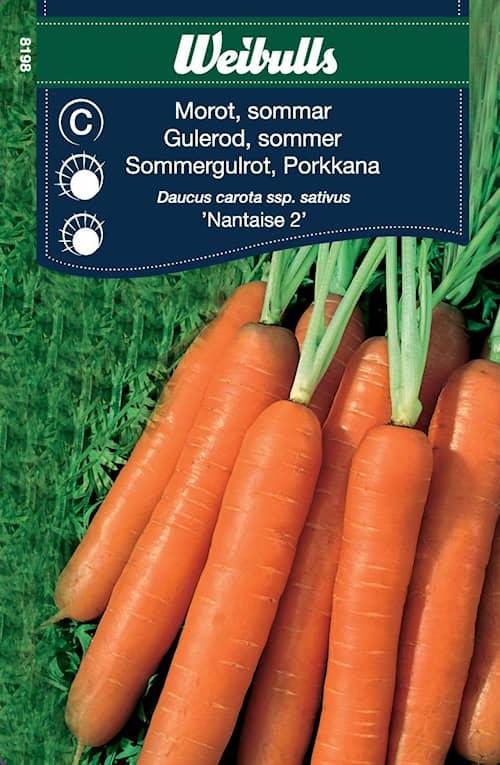 Porkkana Kesä Nantaise 2