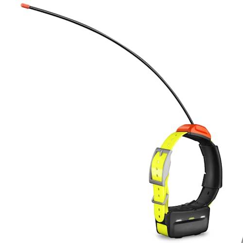 Garmin T5 koiran kaulapanta/GPS-tutkakaulapanta